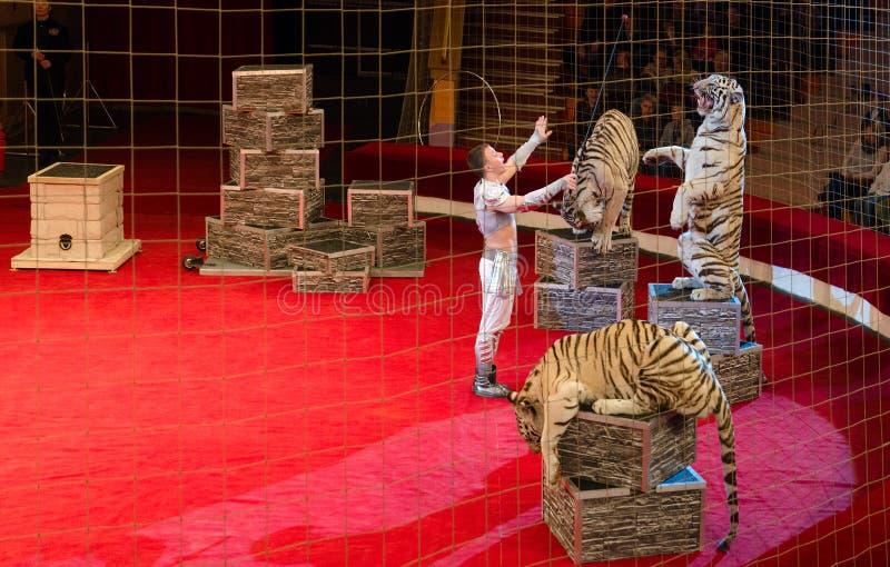 Visites de cirque de Moscou de Nikulin Tigres de blanc d'attraction photo stock