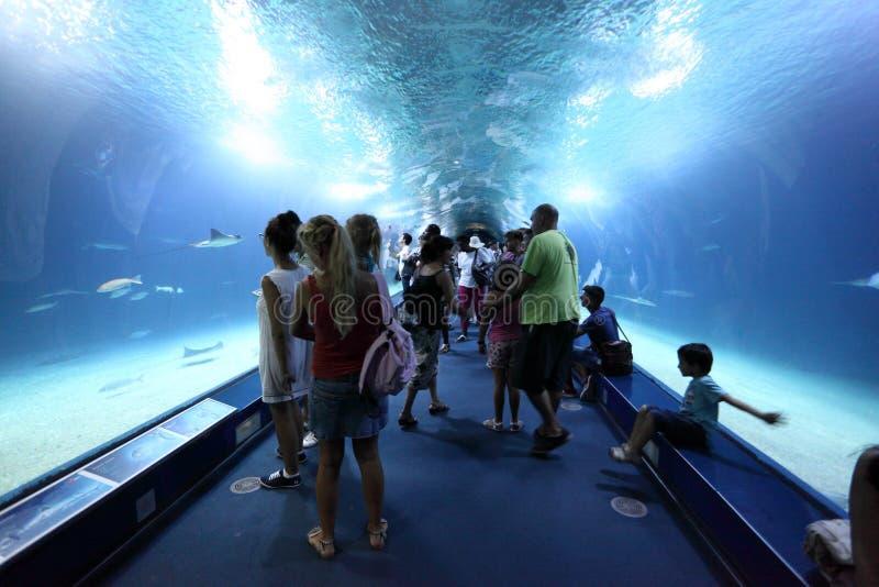 Visiteurs à l'intérieur de du tunnel en verre photos libres de droits