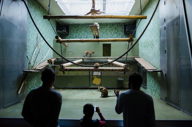 Visiteurs observant une famille de singe chez Berlin Zoo images stock