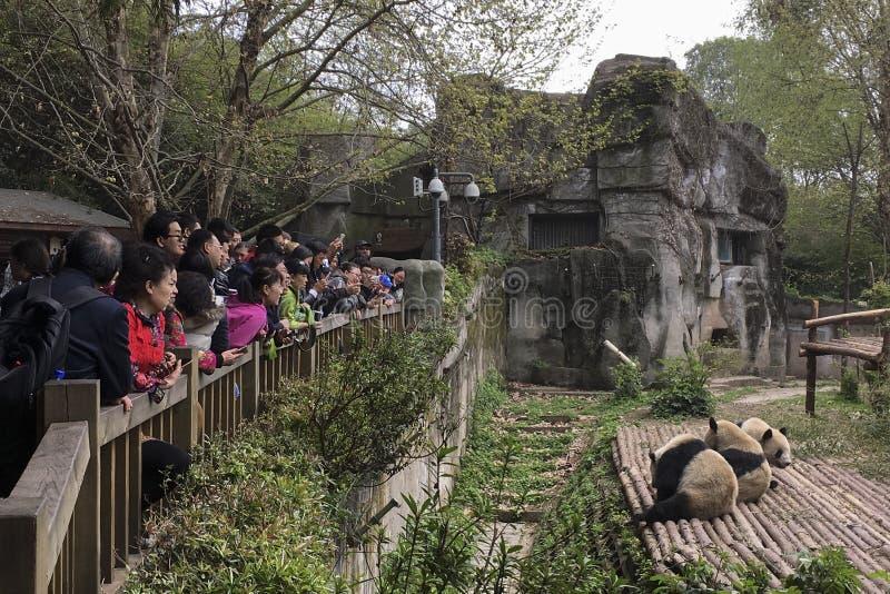 Visiteurs regardant les pandas géants image stock