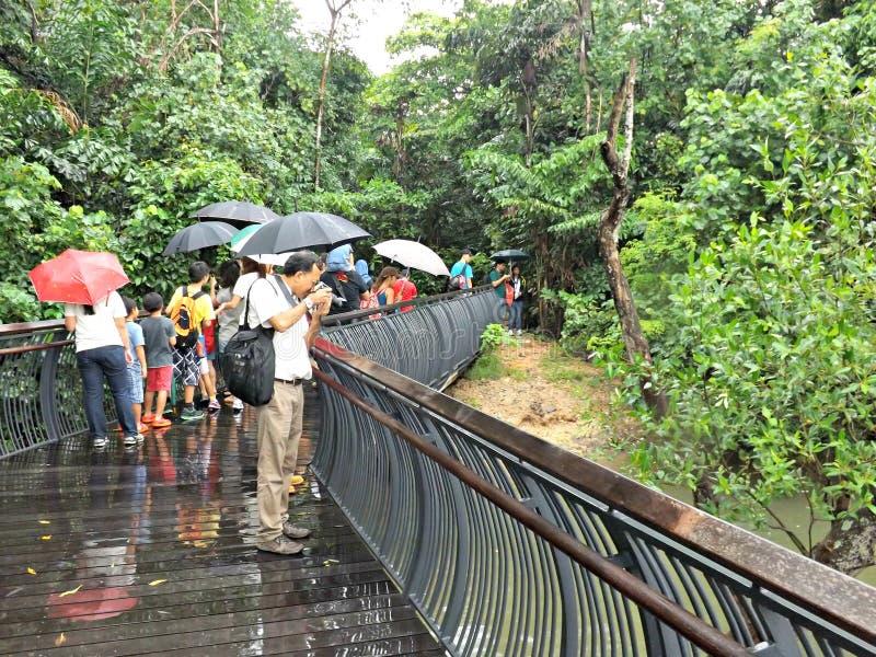Visiteurs sur la promenade, réserve naturelle photos libres de droits