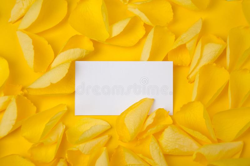Visiting card in rose petals on solid color paper background romantic template. Image royalty free stock image