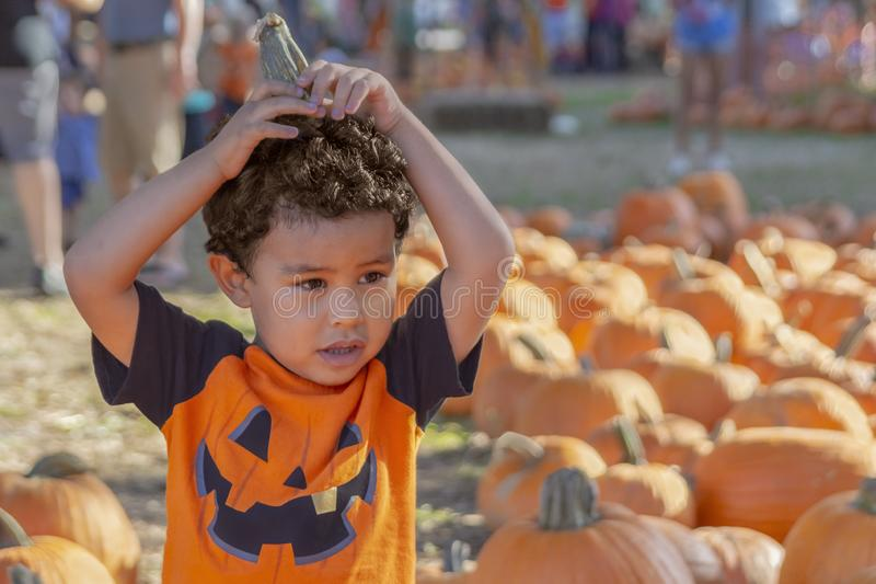 A small boy holds the pumpkin stump on his head to look more like a pumpkin. Visiting at the local church pumpkin patch blending in with the pumpkins royalty free stock photography