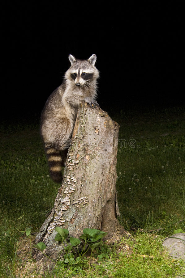 Free Visitor In The Night Stock Photos - 2676303