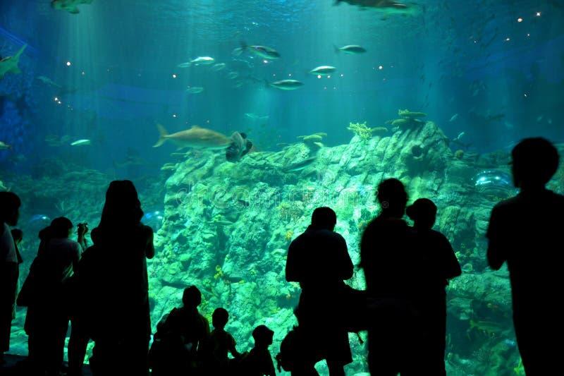 Visitors and aquarium