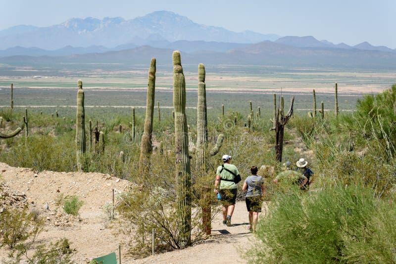 Visitors walk in the Sonoran-Desert Museum, Tucson, AZ. Visitors walk among the tall Saguaro Cactus in the Sonoran-Desert Museum, Tucson, AZ stock images