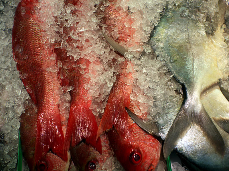 Vissen. stock foto's