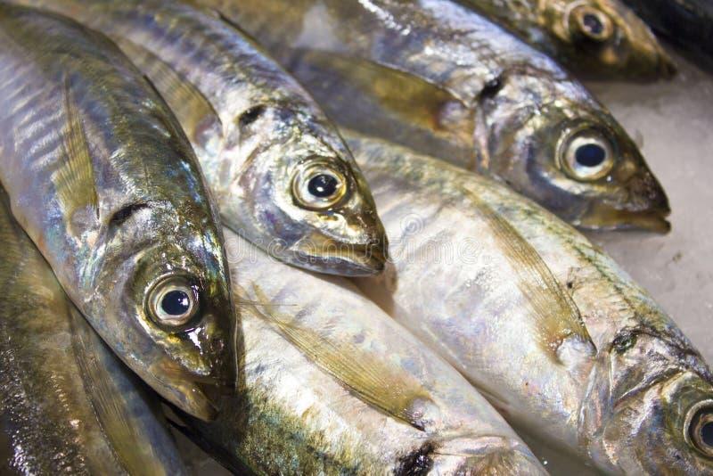 Download Vissen stock image. Image of eten, barcelona, smaak, zilver - 25185345