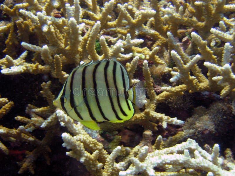 Download Vissen stock afbeelding. Afbeelding bestaande uit ondiep - 29789