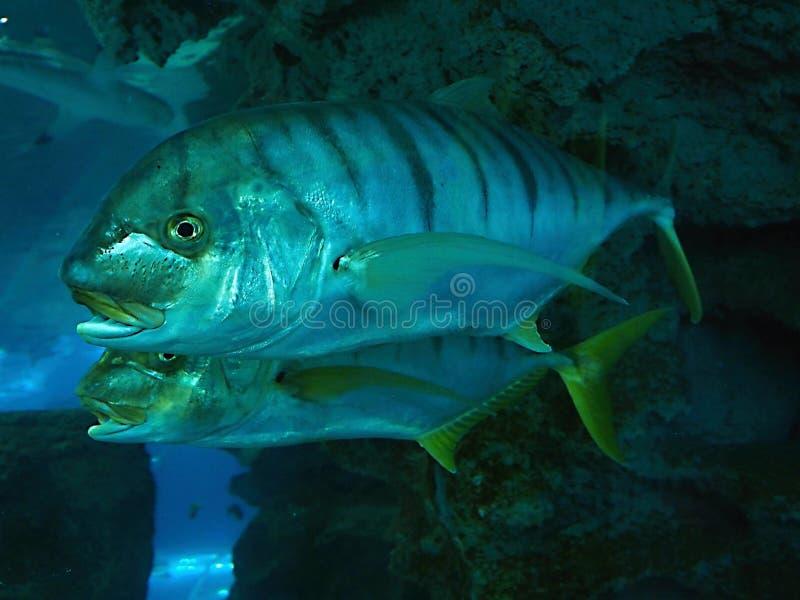 Vissen in aquarium - de DIERENTUIN van Chester stock fotografie