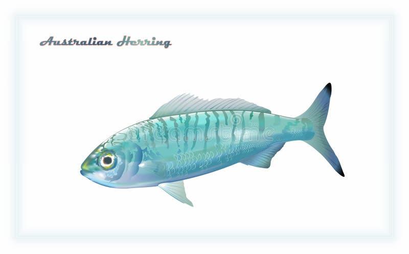 Vissen Australische haringen stock foto