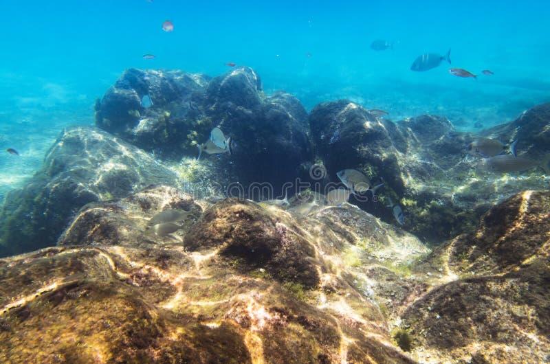 Vissen bij een onderwaterrots stock afbeelding