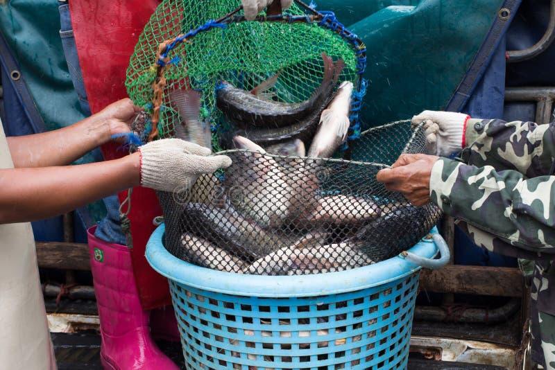 Vissen in de markt stock foto