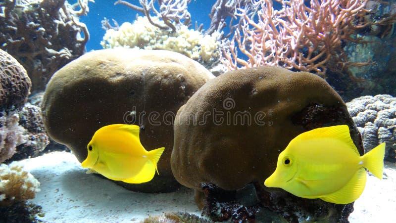 Vissen in de oceaan stock afbeelding