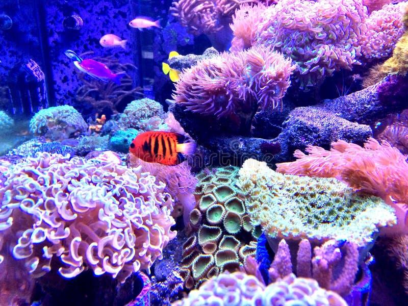 vissen in de tank stock afbeelding