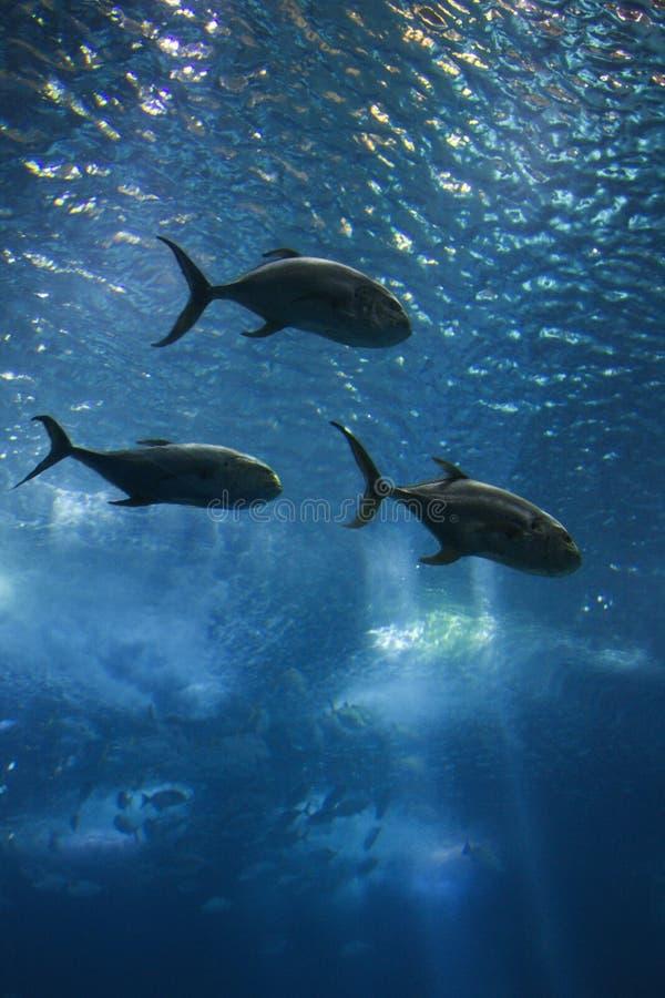 Vissen die in water zwemmen. stock foto