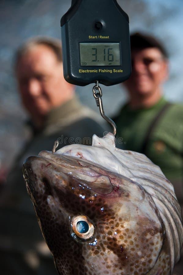 Vissen die worden gewogen   royalty-vrije stock foto