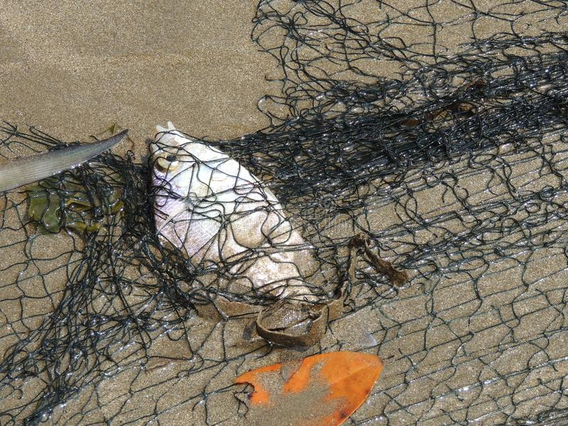 Vissen door het net op het zand worden gevangen dat stock fotografie