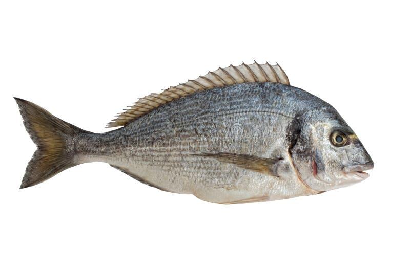 Vissen Dorado royalty-vrije stock afbeeldingen