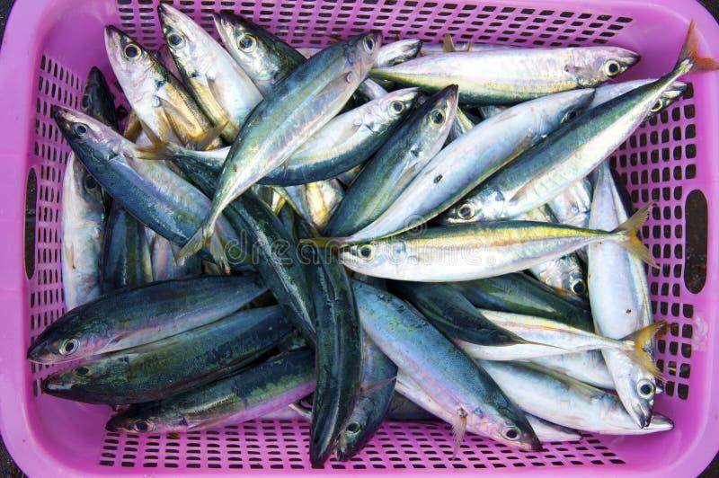 Vissen in een mand royalty-vrije stock afbeelding