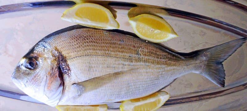 Vissen geroepen verse dorado stock afbeelding