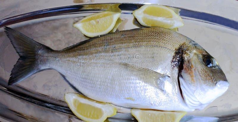 Vissen geroepen verse dorado stock afbeeldingen