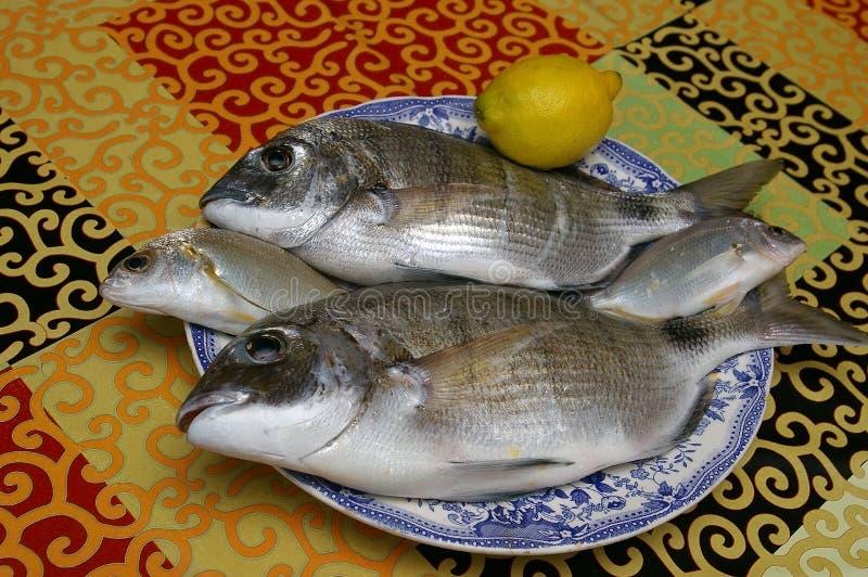 Vissen geroepen verse dorado royalty-vrije stock afbeeldingen