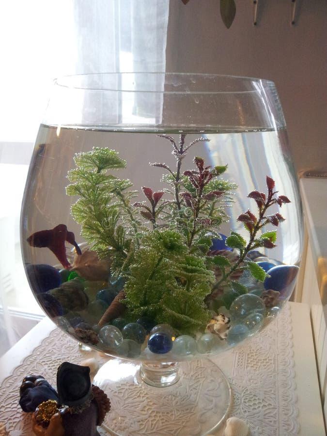 Vissen in het aquarium royalty-vrije stock foto