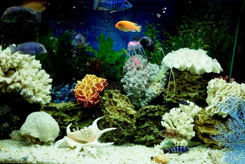Vissen in het aquarium, blauw water Dromen van het overzees Ontspan thuis royalty-vrije stock foto