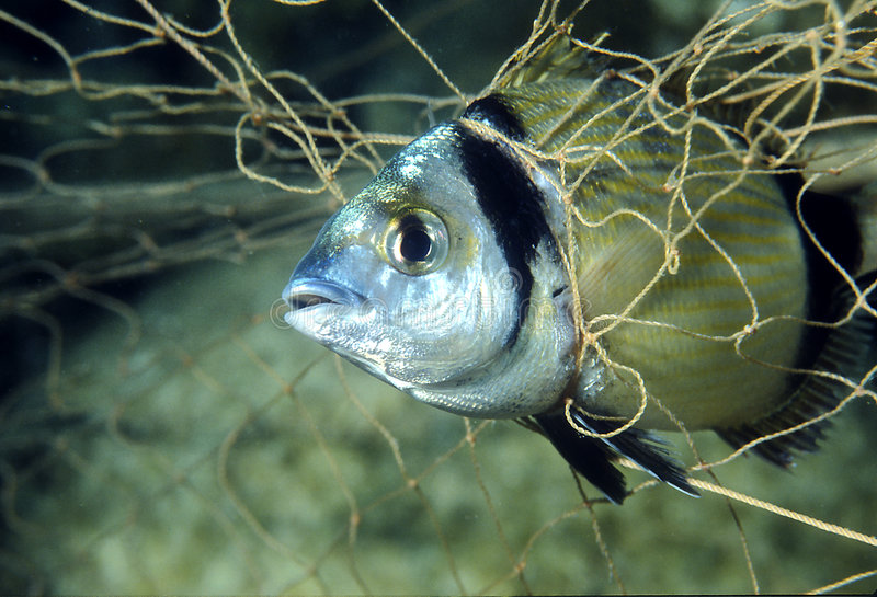 Vissen in het net royalty-vrije stock afbeeldingen