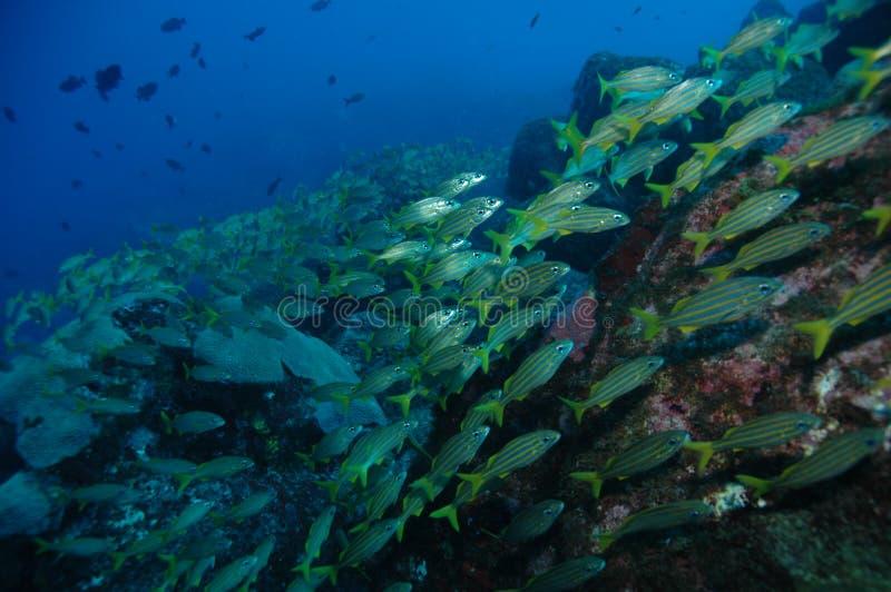 Vissen in koraalrif stock fotografie