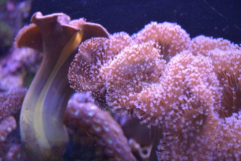 Vissen in Koraalriffen en waterplanten in het Rode Overzees, Eilat, Israël stock foto