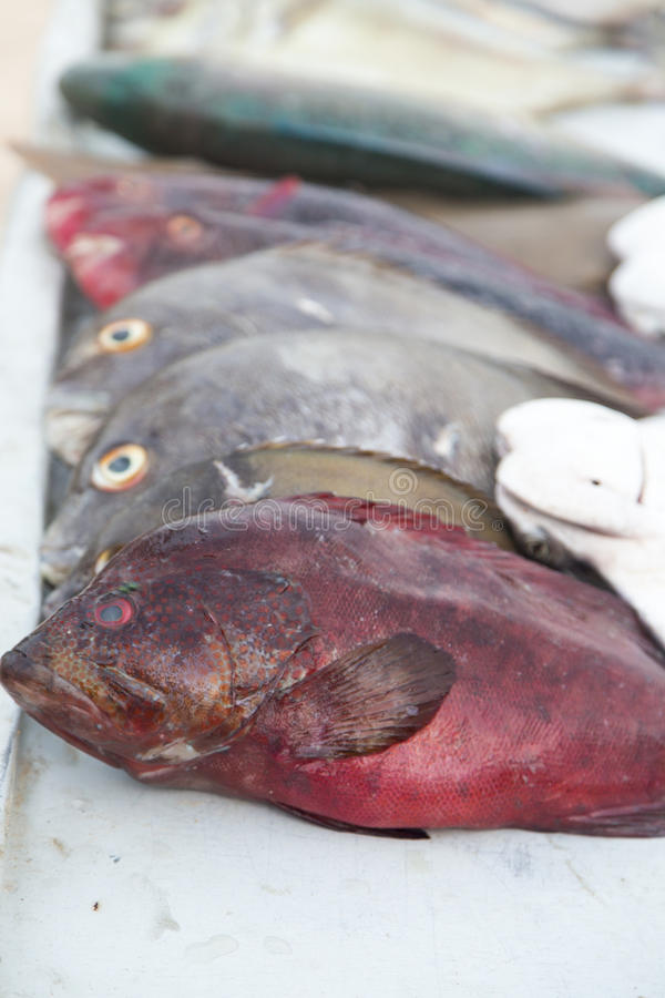 Vissen op de markt royalty-vrije stock afbeelding