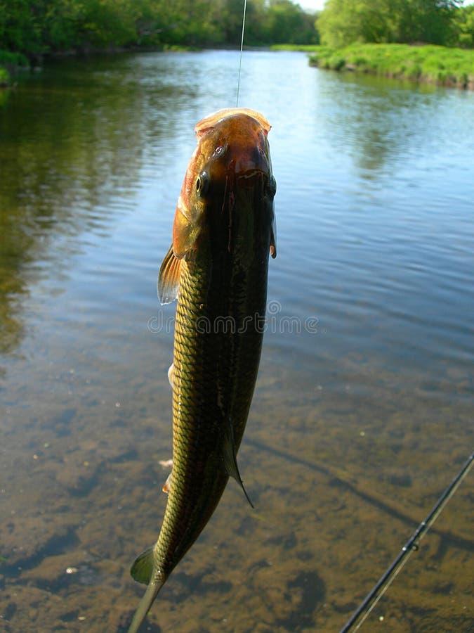 Vissen op een lijn royalty-vrije stock foto's