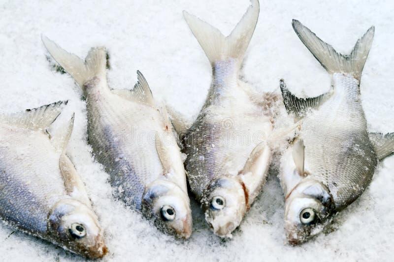 Vissen op het ijs royalty-vrije stock fotografie