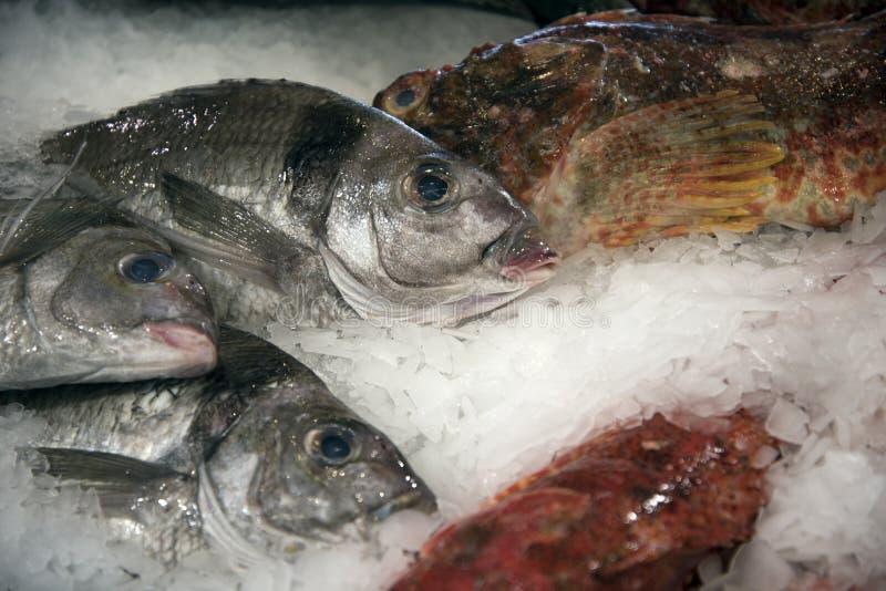 Download Vissen op ijs 2 stock afbeelding. Afbeelding bestaande uit zeeland - 54083485