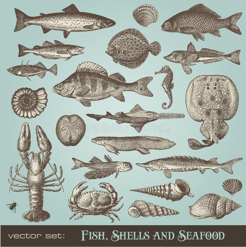 Vissen, shells en zeevruchten stock illustratie