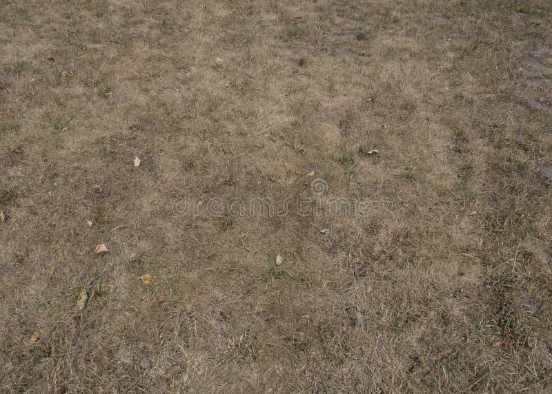 Vissen torrhet för torrt gräs, inget regn i sommarklimatförändringar, bakgrund arkivbilder