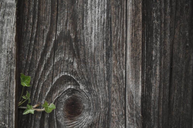 Vissen trävägg arkivfoto
