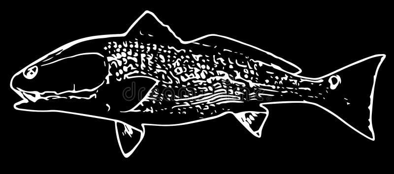 Vissen van de zalm de rode trommel op zwarte achtergrond royalty-vrije illustratie