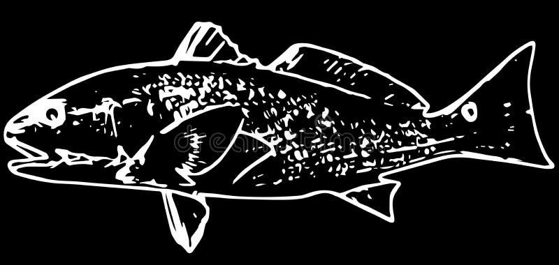 Vissen van de zalm de rode trommel op zwarte achtergrond vector illustratie