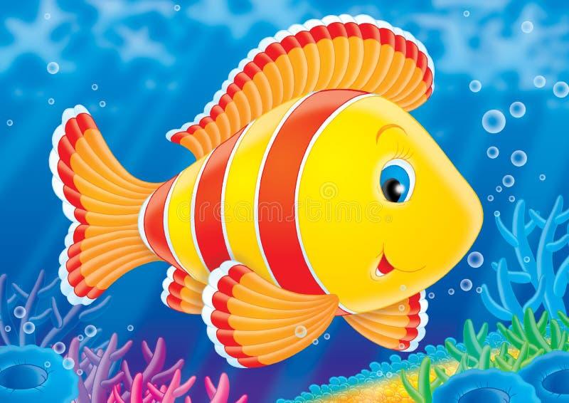 Vissen van een koraalrif. royalty-vrije illustratie