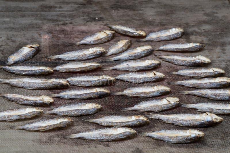 Vissen verlaten om te drogen royalty-vrije stock foto