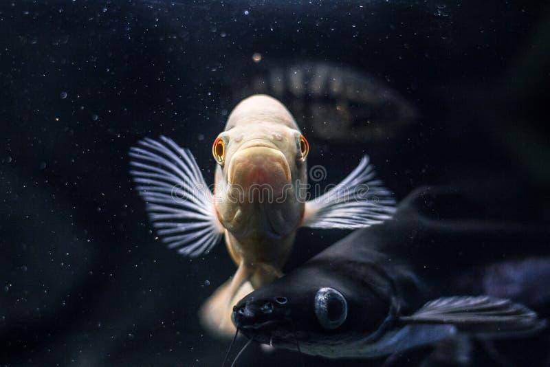 Vissen in vissentank royalty-vrije stock afbeelding