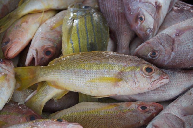 Vissen voor verkoop in Barkha Fish Market, Muscateldruif stock foto