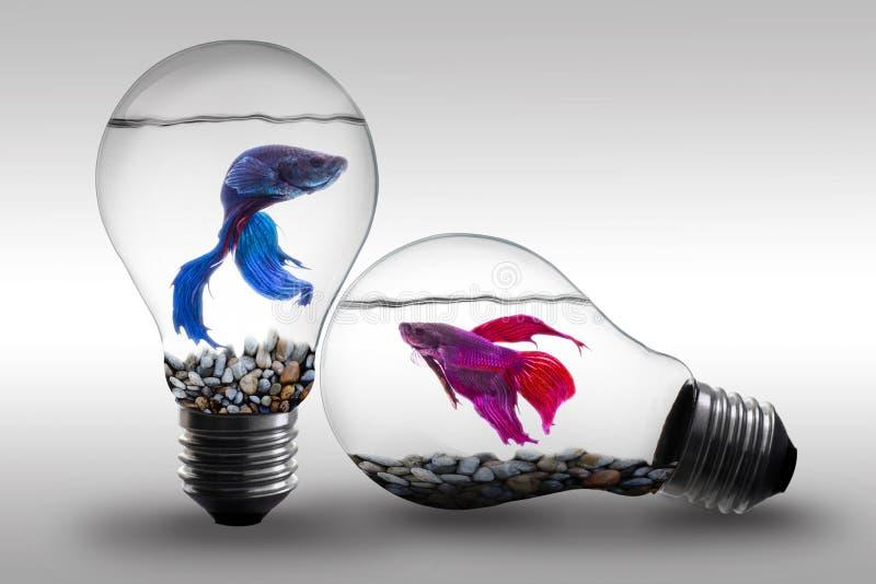Vissen in water binnen een elektrisch van het gloeilampenconcept en Idee achtergrond royalty-vrije stock afbeelding