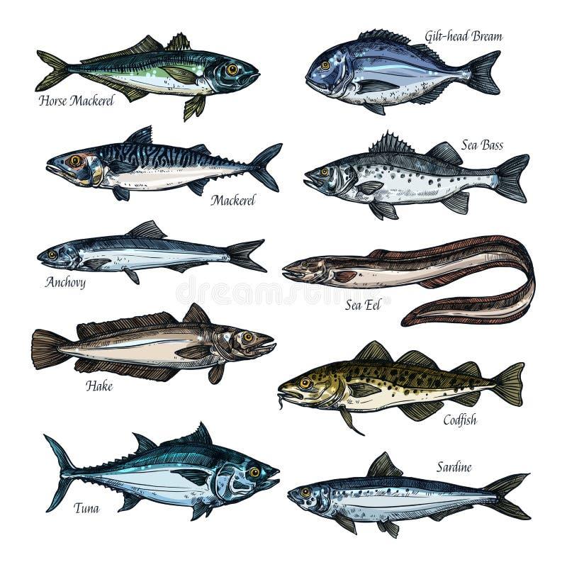 Vissen, zeevruchtenschets met overzees, oceaandier wordt geplaatst dat stock illustratie