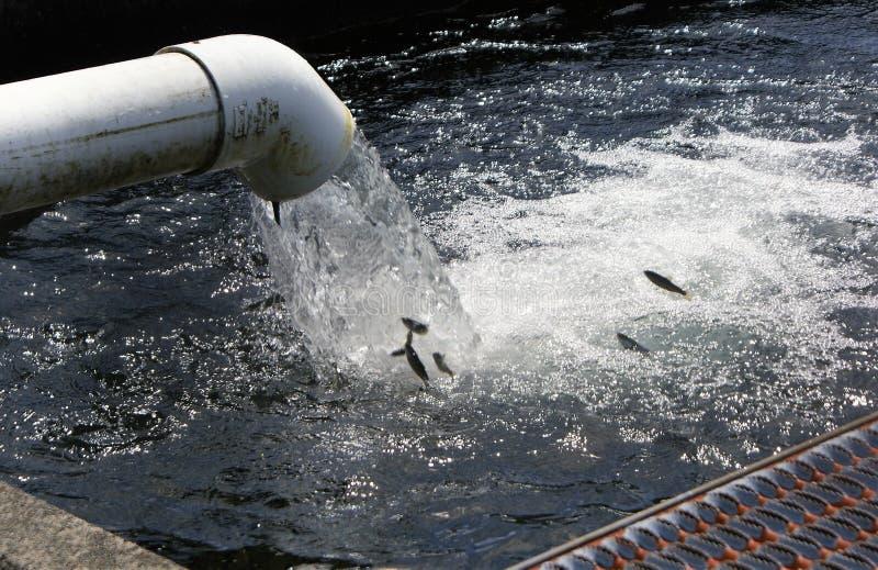 Vissendaling van water die uit een pijp komen stock foto