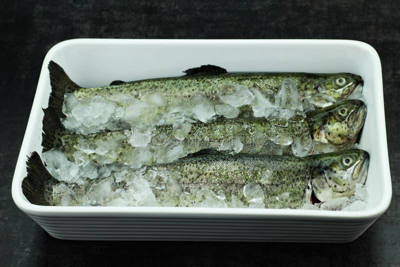 Vissenforel Stock Foto
