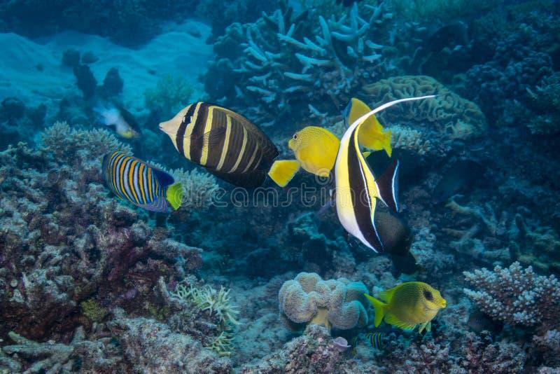 Visseninzameling stock afbeelding